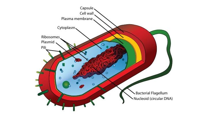 Microorganisms in process fluids